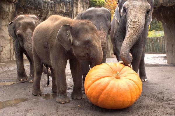 Les éléphants vous souhaitent un Bon Halloween 2015 !